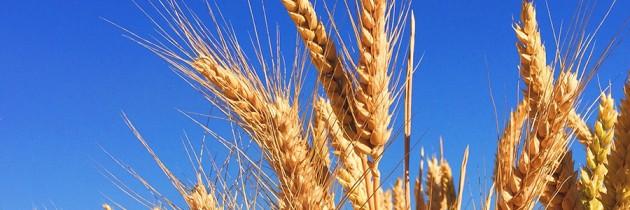 ¿Quién se ha llevado mi trigo?